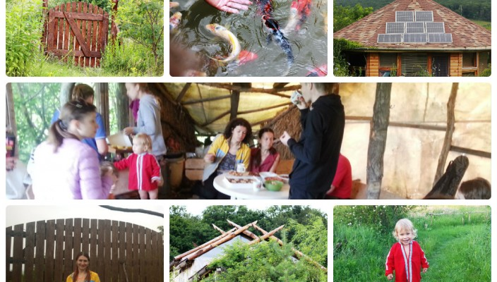 collage_photocat